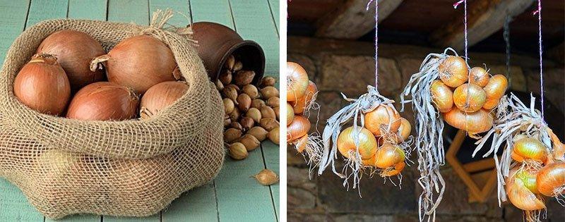 Хранение урожая лука