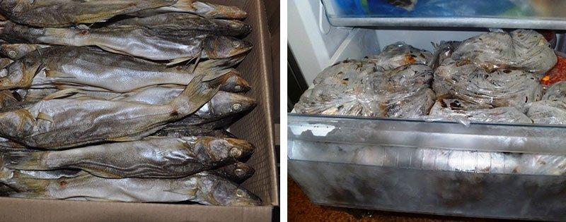 Хранение сушеной и вяленой рыбы