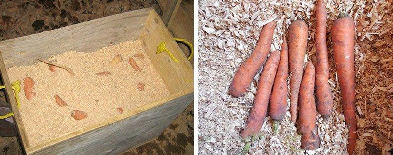 Опилки для хранения моркови