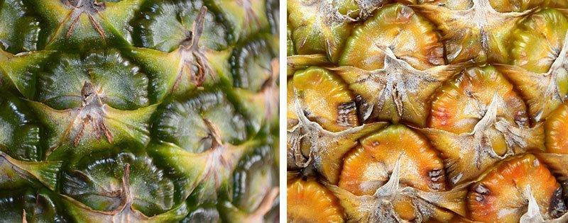 Зелёный и спелый ананас