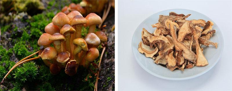 Сушка и заготовка грибов