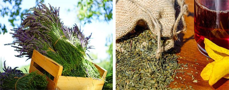 Лекарственные травы сушеные