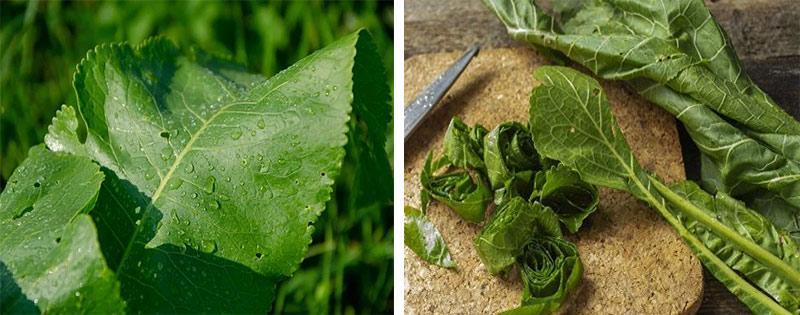 Хранение и заморозка листьев хрена